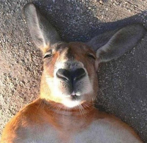 Animal-selfies-04