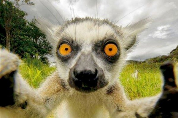 Animal-selfies-07