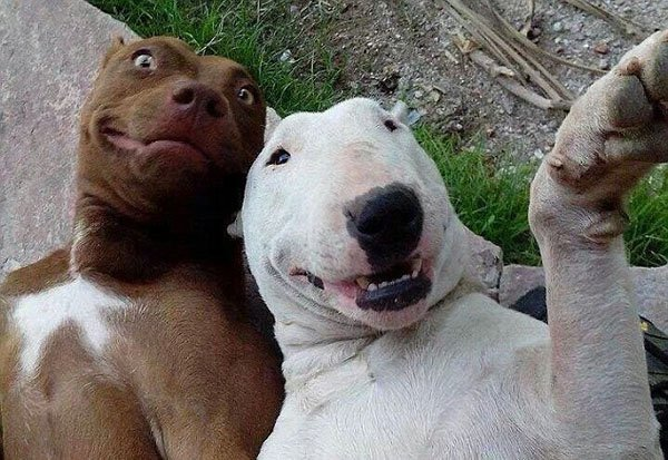 Animal-selfies-11