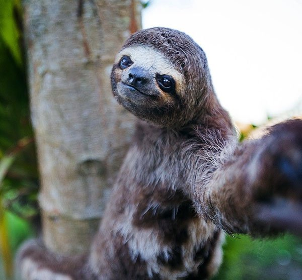 Animal-selfies-26