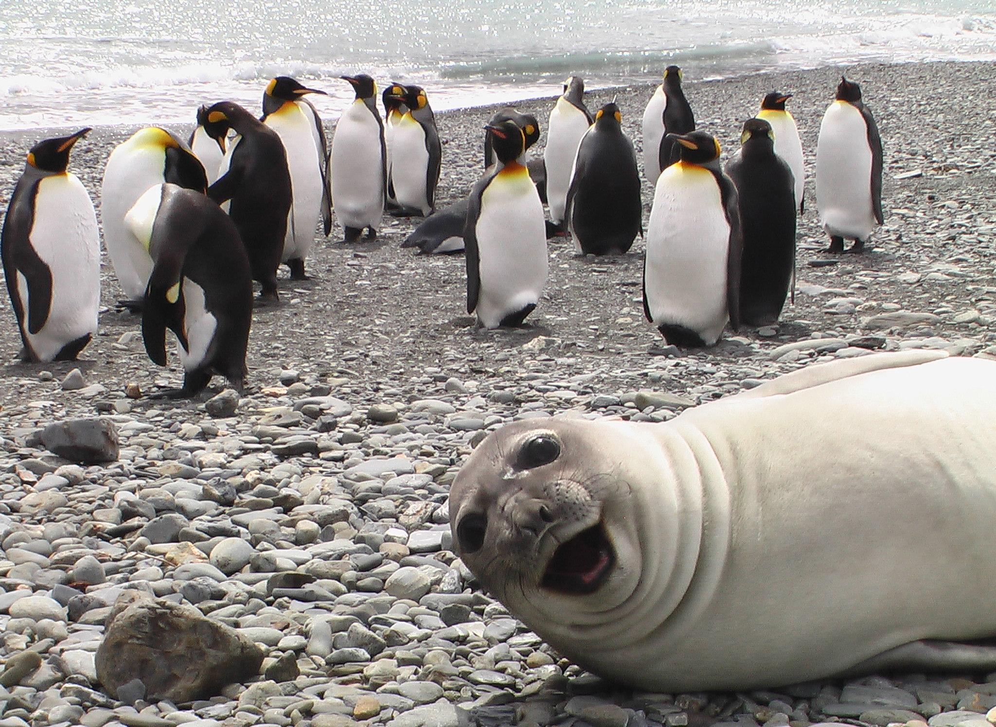 Эти животные знают толк в фотосессии! рис 2