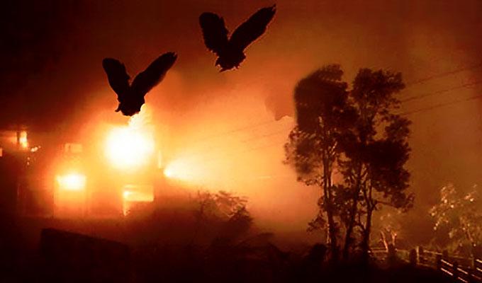 jatinga birds