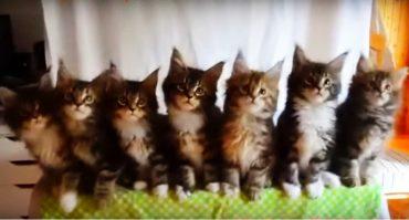 котята-танцоры