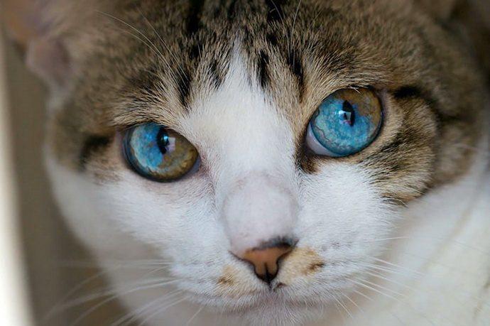 кошачий глаз рис 6