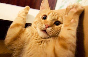 Кот против огурца