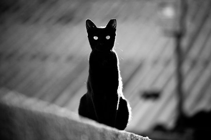 черные коты рис 5