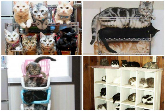 Кошачьи органайзеры