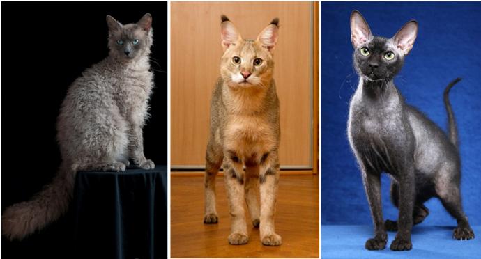 коты породы