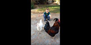 Курица и ребенок