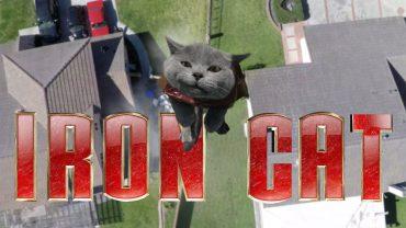 кот Аарона