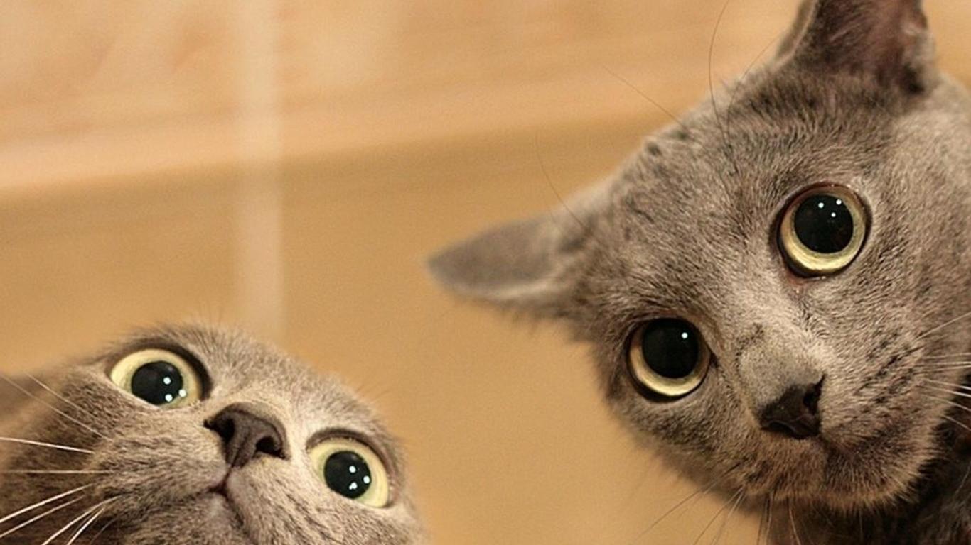 Cats funny cats