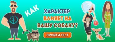 тест о собаках