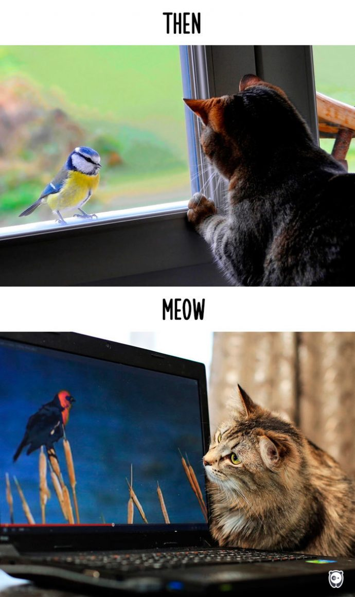 cats-then-now