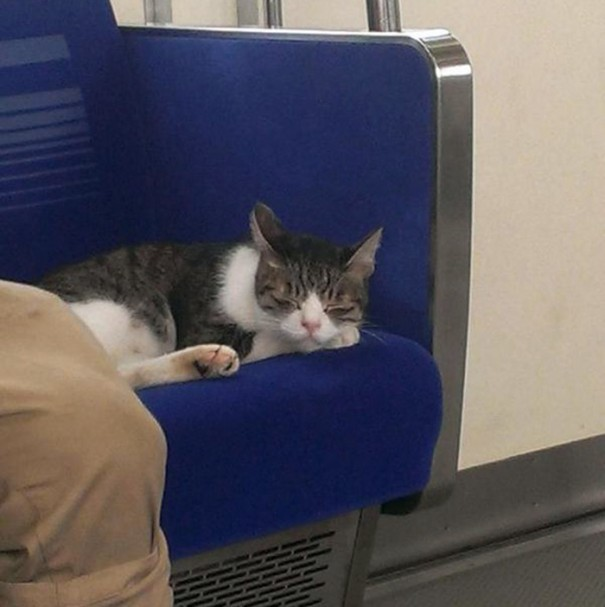 cat-rides-subway