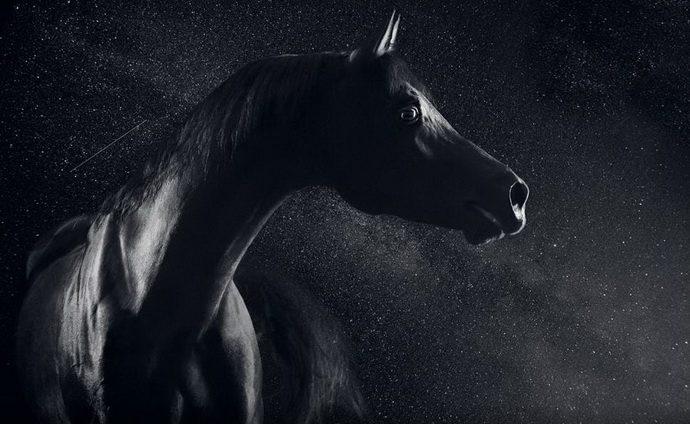 horse8