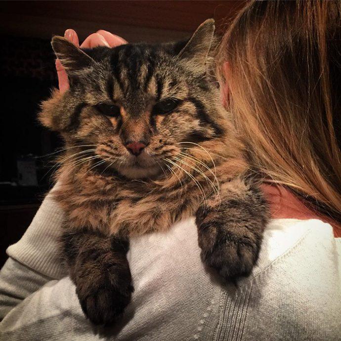 oldest-cat-living-guinness-world-records-corduroy