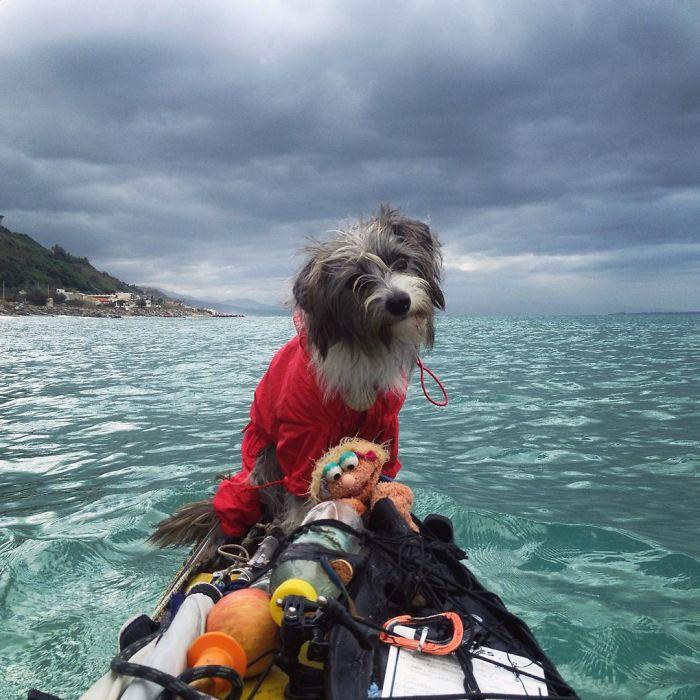 Испанец путешествует с собакой на лодке рис 5