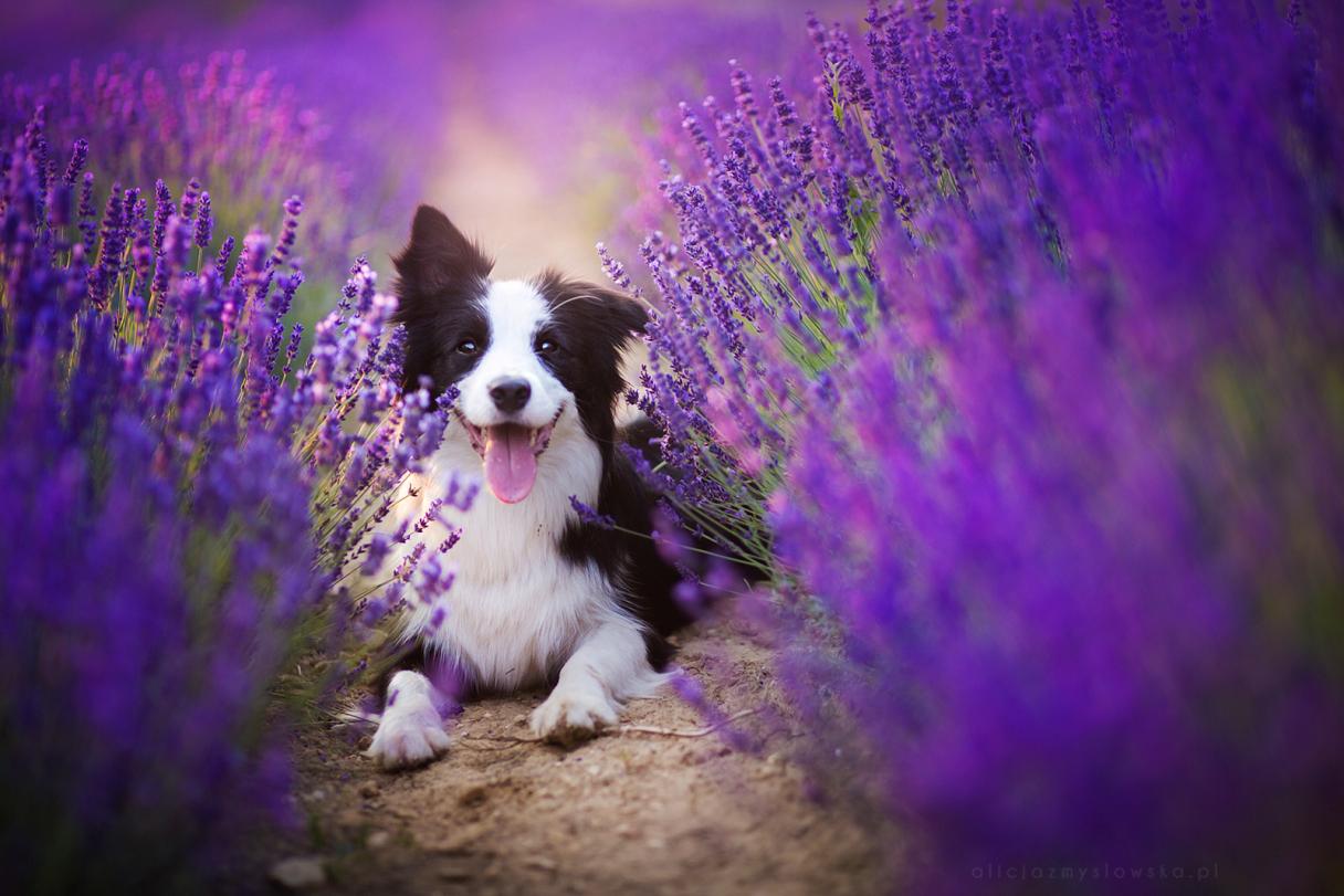 Сказочные фото собак рис 9