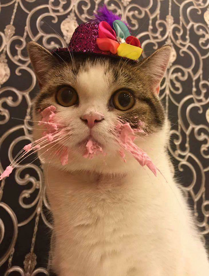 Кот и торт рис 4