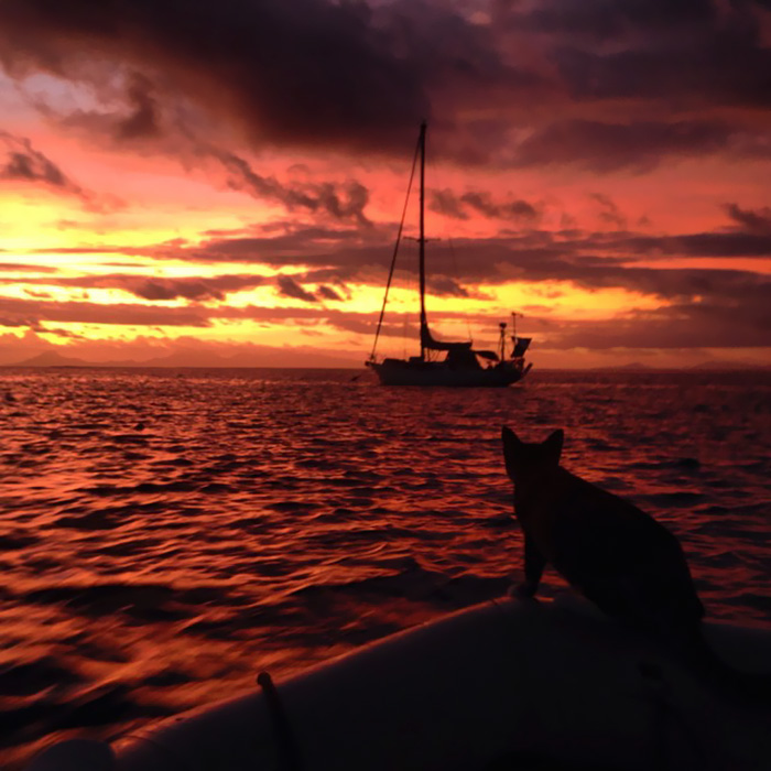 Кошка путешествует на яхте рис 12