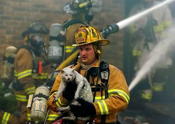 saving-pets