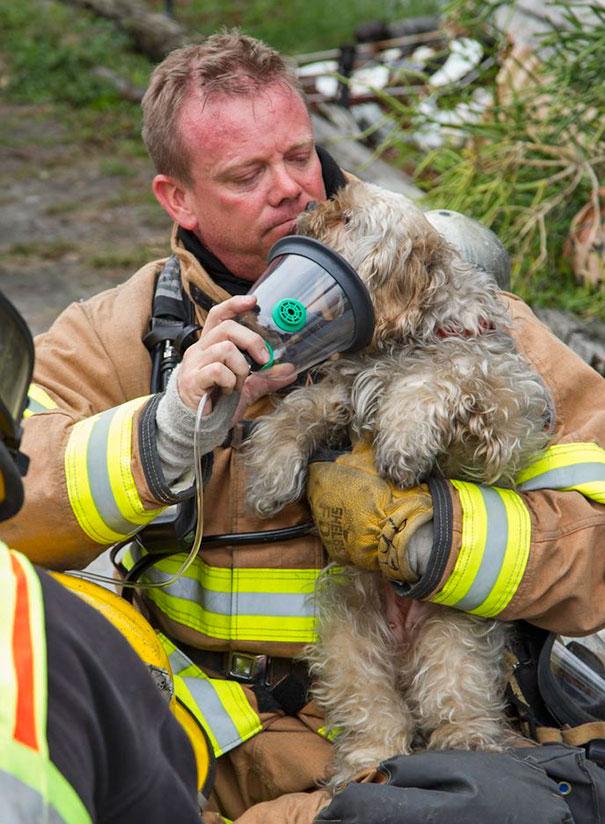 saving-pets (7)