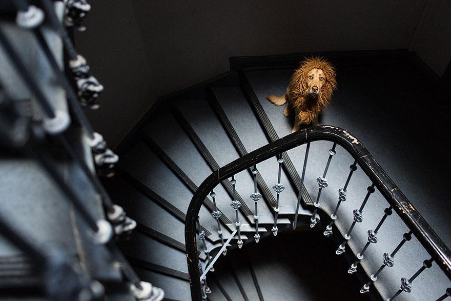 stray-dog-big-city-lion-grossstadtlowe-julia-marie-werner-25