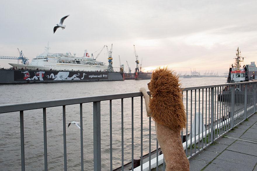 stray-dog-big-city-lion-grossstadtlowe-julia-marie-werner-3