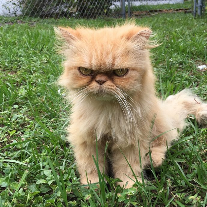 grumpy-cat-adopted-ginger-garfield-4[1]