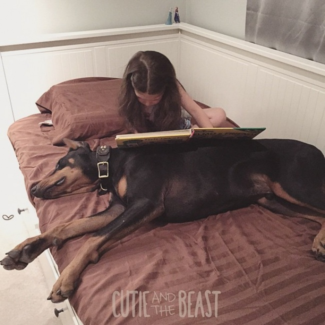 1157610-R3L8T8D-650-cutie-and-the-beast-dog-girl-seana-doberman-99