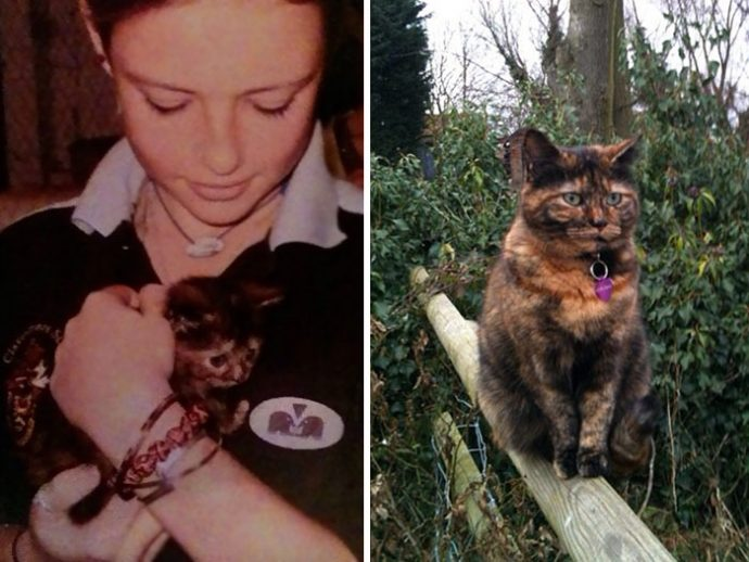before-after-pets-growing-old-first-last-photos-50-577badff14979__700