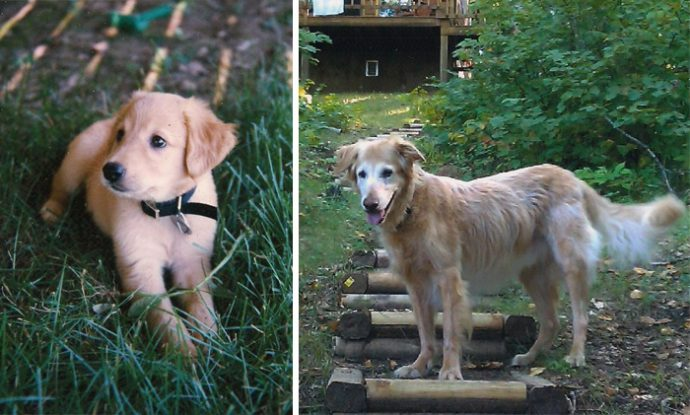 before-after-pets-growing-old-first-last-photos-50-577bbdc4374d9__700