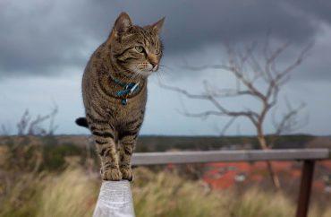 independent-cat1