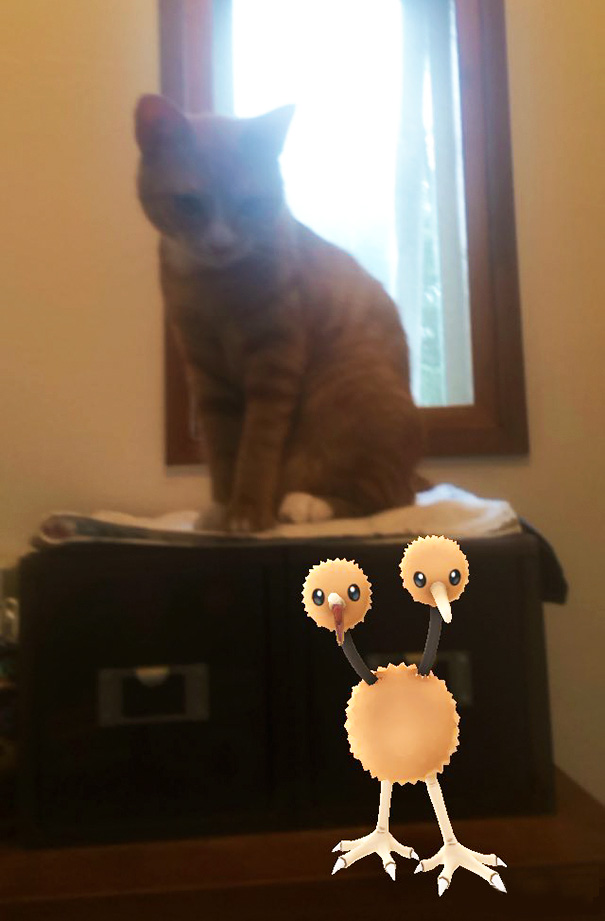 pets-can-see-pokemon-go (3)