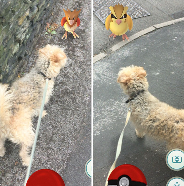 pokemon-go-dog-walking-animal-shelter-muncie-4
