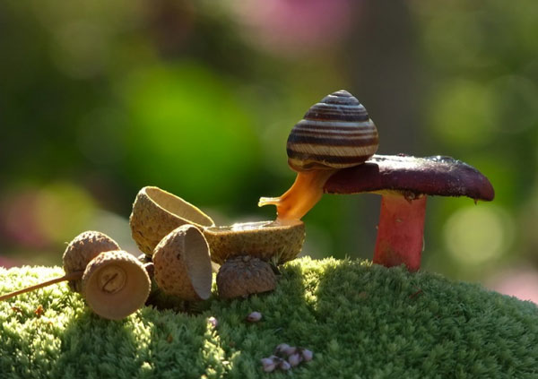 world-of-snails (7)