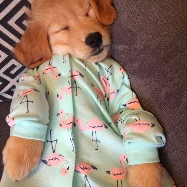 Puppies-in-Pajamas рис 2