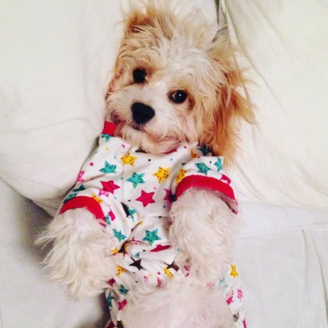 Puppies-in-Pajamas рис 8