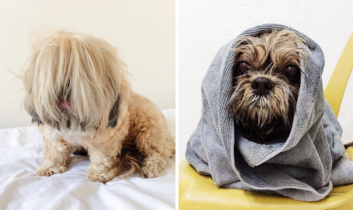wet-dogs-before-after-bath-40-57a439c780f8b__700