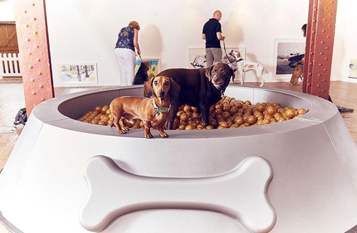 world-first-dog-art-exhibition3