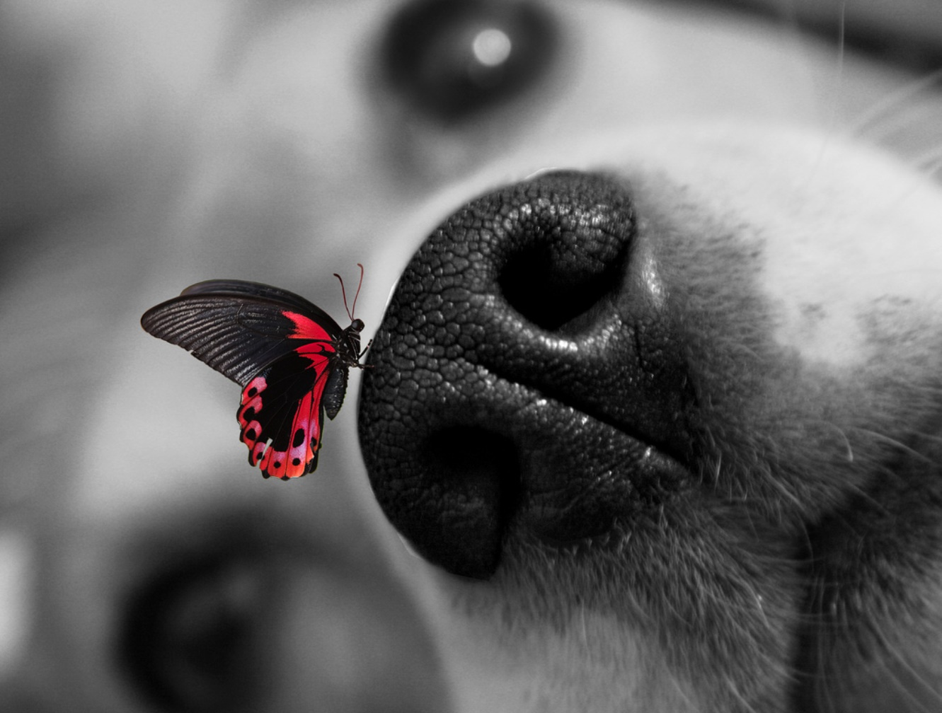dog-and-butterfly-dogs-37782000-1331-1008