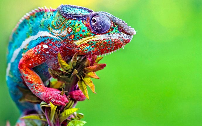 colorful-animals