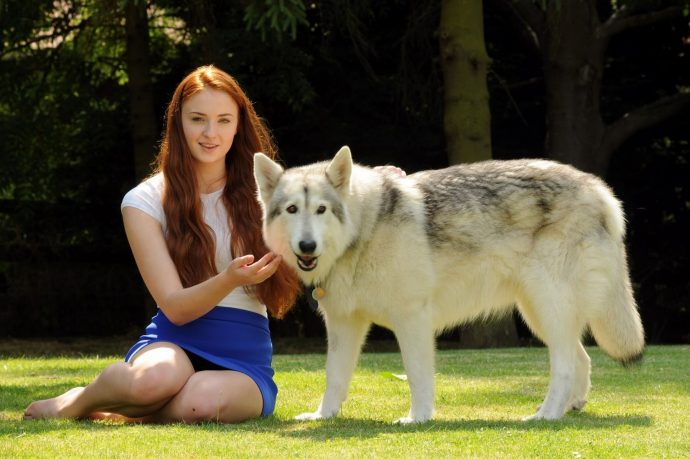 pets-game-thrones