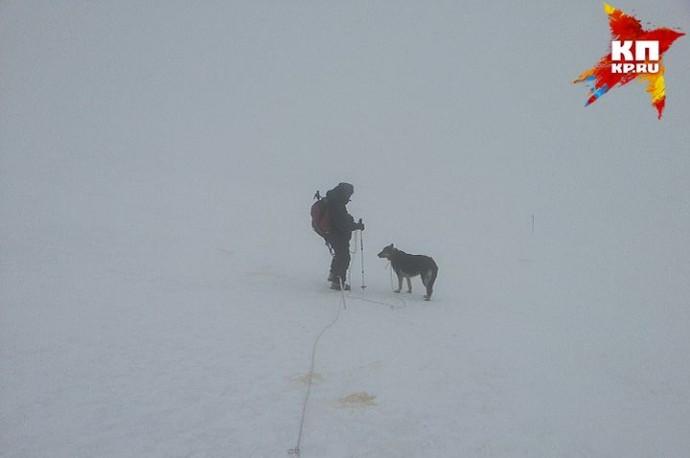 Elbrus-ovcharka2