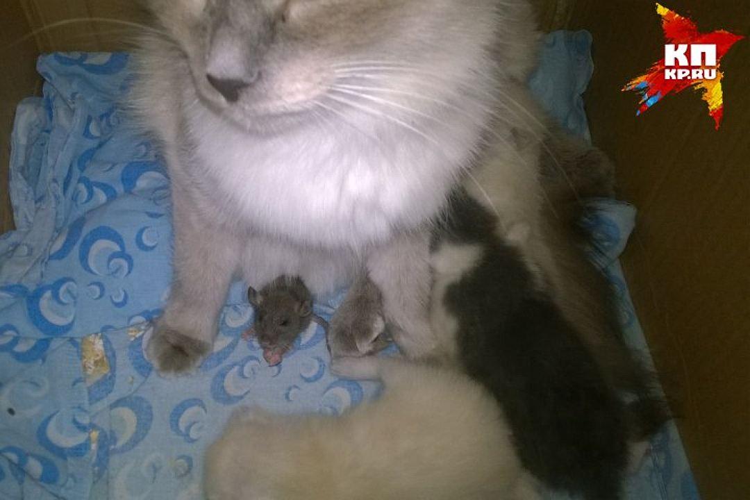 cat-mous3