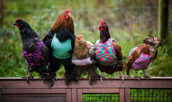 cute-animals-wearing-tiny-sweaters-15-57ff4f9861094__605
