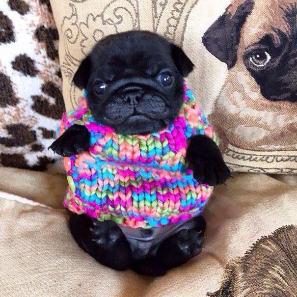 cute-animals-wearing-tiny-sweaters-59-58049dbacab8b__605
