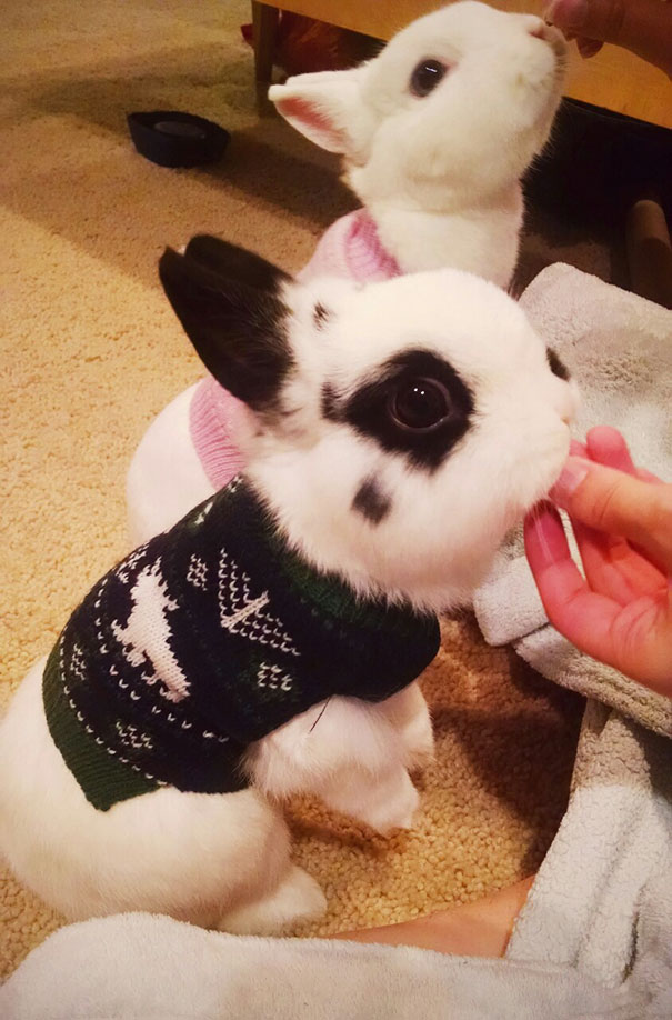 cute-animals-wearing-tiny-sweaters-79-5804cecfbbde8__605