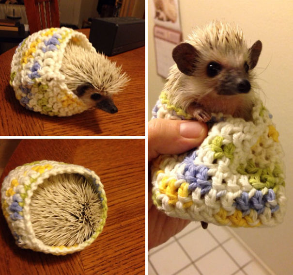 cute-animals-wearing-tiny-sweaters-85-5804d7834c9c8__605