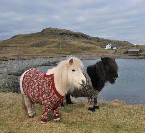 cute-animals-wearing-tiny-sweaters-99-5806261e76674__605